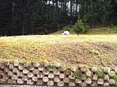 Upravený trávník u lesa